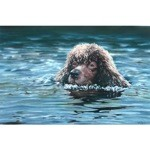 Swimming Print (Irish Water Spaniel)