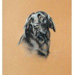 Black Lab Study Print (Labrador Retriever)