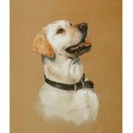 Yellow Lab Head Study Print (Labrador Retriever)