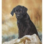 The Lost Boy Print (Labrador Retriever)