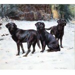 Cool Calm & Collected Print (Labrador Retriever)