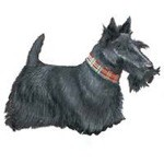 Scottish Terrier Clock