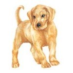 Yellow Lab Puppy Clock